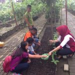Planting Cocoa